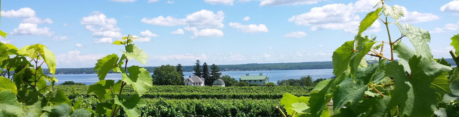 Finger Lakes, Fox Run Vineyards